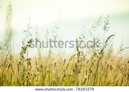 Grass on the field - stock photo