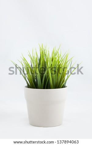 grass plant for indoor - stock photo