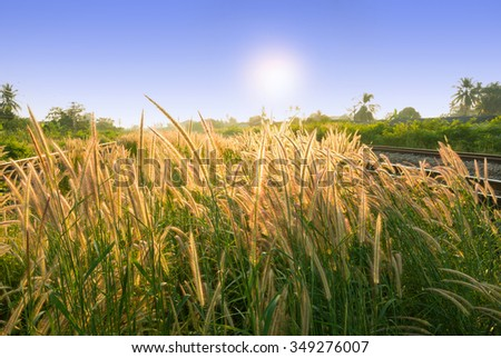 Grass Plant under the Sunrise Beside Railway Track - stock photo