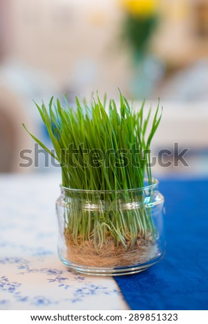 grass sprouts - stock photo