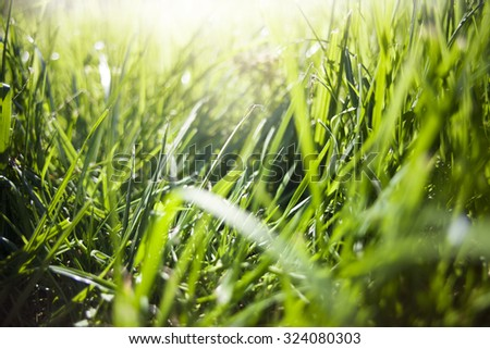 Grass. sun. - stock photo