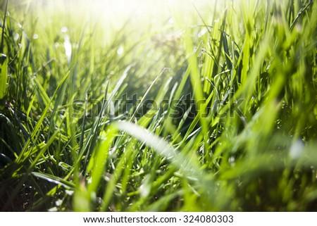 Grass. sun. - stock photo