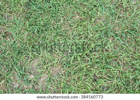 grass texture background - stock photo