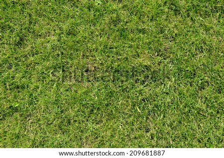 grass texture may be used as background - stock photo
