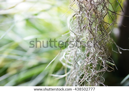 grass vine wavy background - stock photo