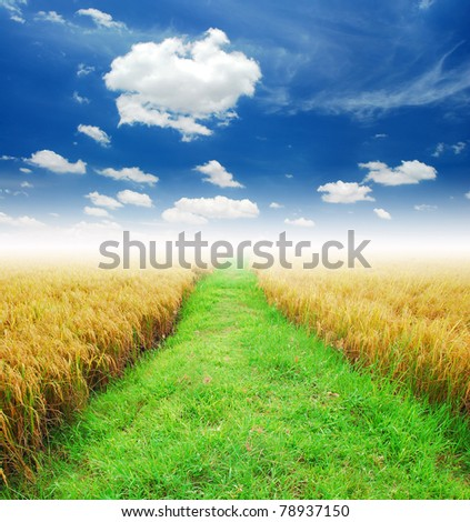 Grass way yellow field and blue sky background in Thailand - stock photo