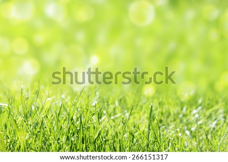 grass with bright sunlight - stock photo