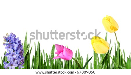 grass with spring flowers - stock photo