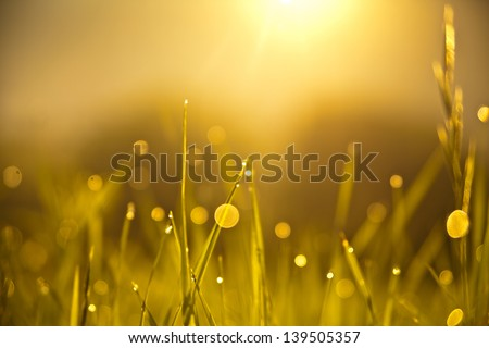 Grass with sun at sunrise - stock photo