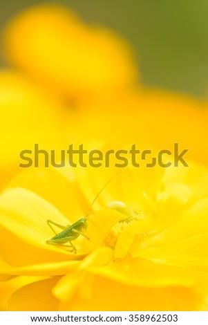 grasshopper and flower - stock photo