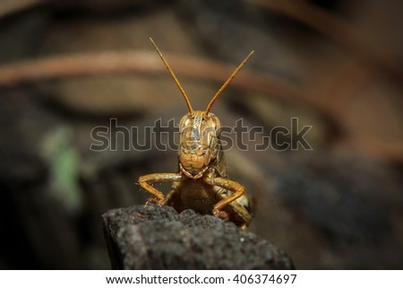 Grasshopper, insect, animal, nature. - stock photo