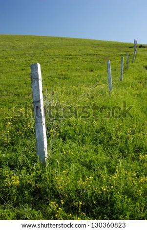 grassland - stock photo