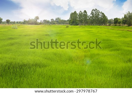 Grassland for the farmer working in the rice field. - stock photo