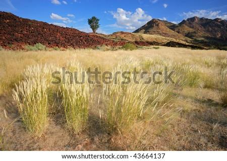 Grassland landscape, Brandberg mountain, Namibia, southern Africa - stock photo