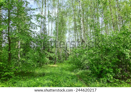 grassland landscape with the sky in the spring, sunny day - stock photo