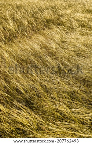 Grasslands 2 - stock photo