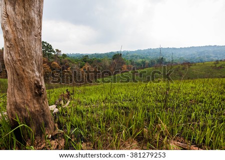Grasslands,Khao Yai National Park Thailand - stock photo