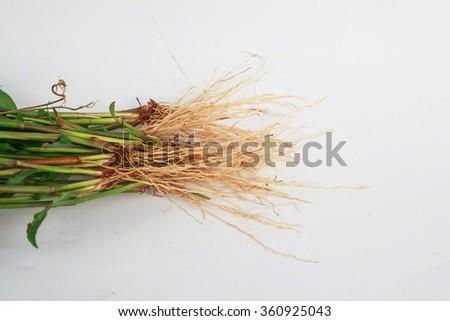 Grassroots - stock photo