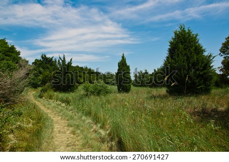 Grassy and curved walking path through a nature park with trees and tall grasses around.  blue sky has room for copy space - stock photo
