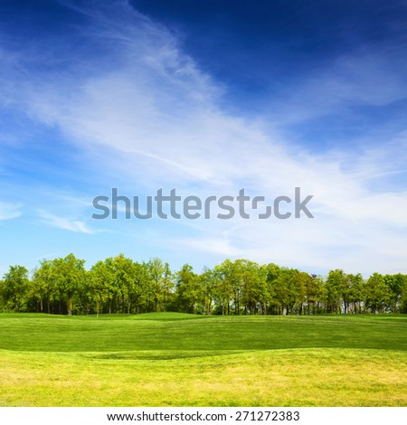 grassy field and trees with blue sky on background, landscape in summer day - stock photo