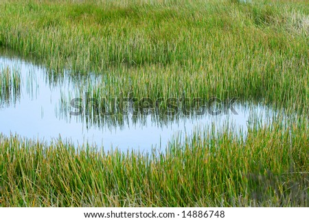 grassy marshland environment with standing water - stock photo