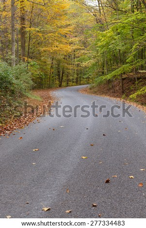 Gravel Road through Autumn Woods - stock photo