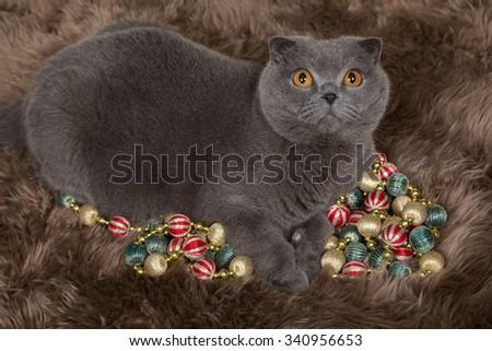 gray British cat Christmas decorations  - stock photo