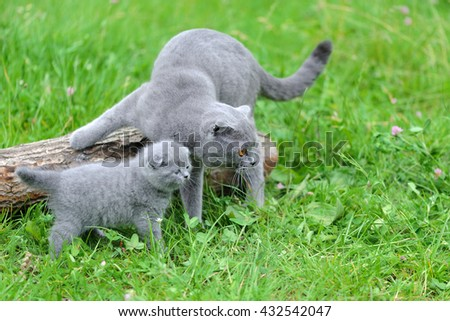 Gray cat and kitten in green grass on nature - stock photo
