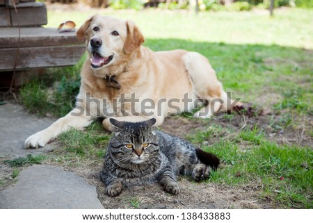 gray cat in the garden on a background of dog - stock photo