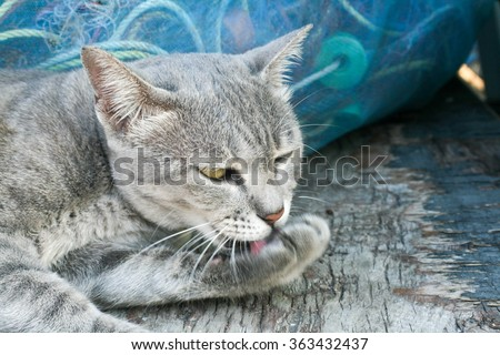 Gray cat licking the feet themselves,Gray cat,Gray cat,Gray cat,Gray cat,Gray cat,Gray cat,Gray cat,Gray cat,Gray cat,Gray cat,Gray cat,Gray cat,Gray cat,Gray cat,grey cat,grey cat,grey cat,grey cat - stock photo