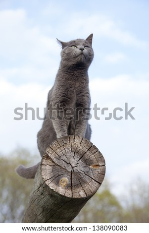gray cat resting on top of a log - stock photo