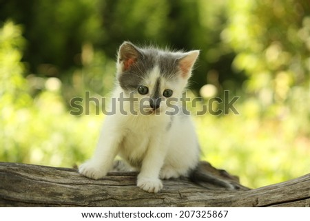 Gray cute kitten standing on the tree stump - stock photo