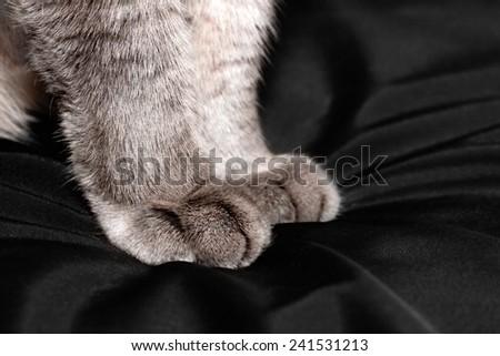 Gray fluffy cat paws closeup - stock photo