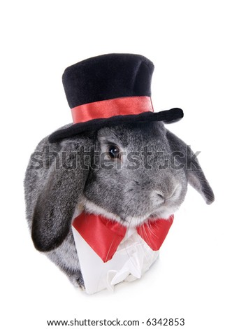 Gray formal lop ear rabbit dressed in red bow tie iand top hat solated on white background - stock photo