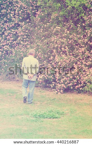 Gray-haired man walking  in the park with lush pink flowering shrubs. Toned - stock photo