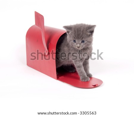 Gray kitten and red mailbox on white background - stock photo