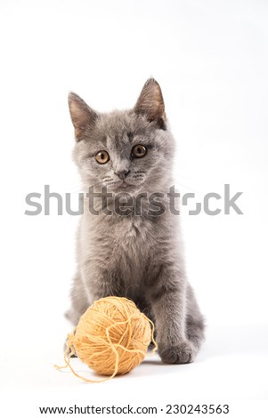 gray kitten with a ball of yarn on white background - stock photo