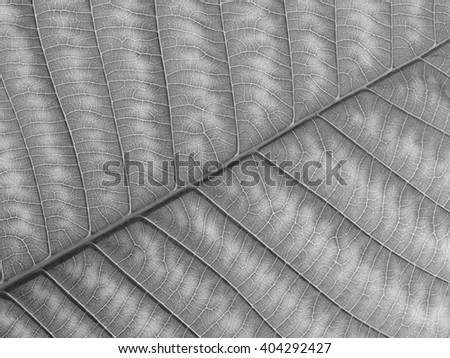 gray leaf texture - stock photo