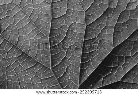 gray leaf texture, unfocused - stock photo