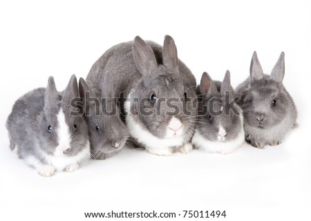 gray mother rabbit with four bunnies, isolated - stock photo