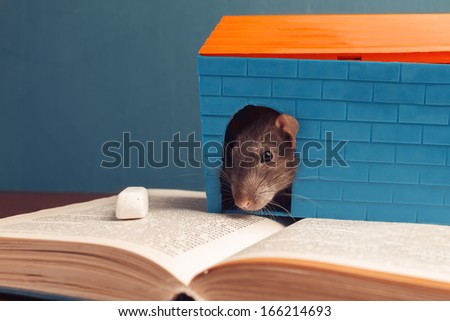 Gray mouse is sitting in the house on the book - stock photo