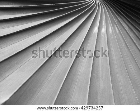 gray palm leaf with shadow pattern - stock photo