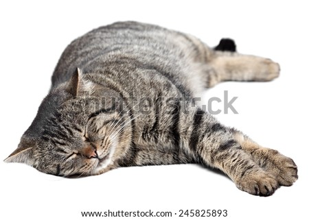 Gray striped cat sleeping on a white background. Isolated. - stock photo