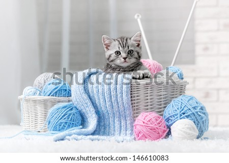 Gray striped kitten sitting next to a basket ball of yarn in the interior - stock photo