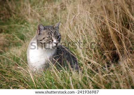 Gray stripped cat playing on meadow. Sunny summer day. - stock photo