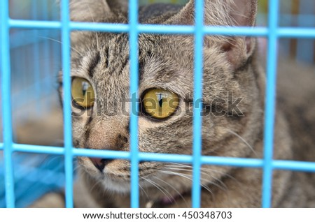 Gray tabby cat in cage - stock photo
