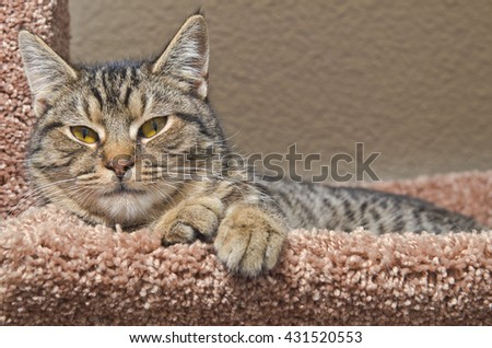 Gray tabby cat laying on soft brown bed - stock photo