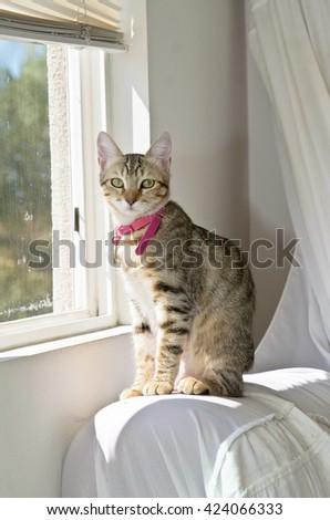 Gray Tabby Cat Sitting at Window - stock photo