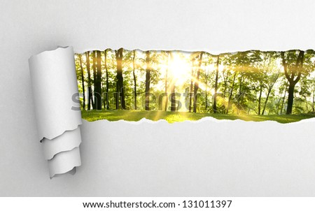 gray torn paper and green forest background - stock photo
