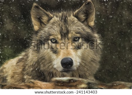Gray Wolf in a Snow Storm - stock photo